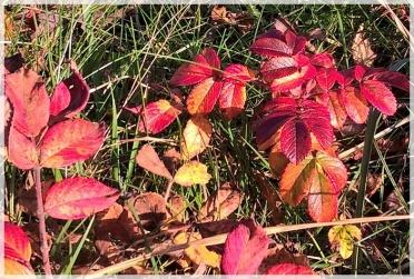 Herbst 2