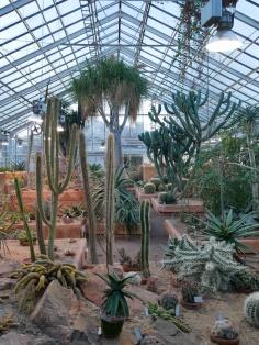 Botanischer Garten Göteborg, Schweden, Gewächshaus