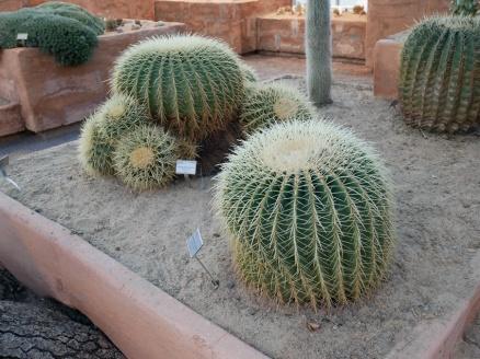Botanischer Garten P1000221