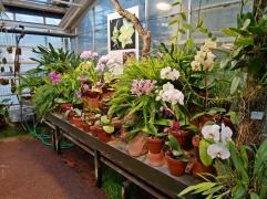 Botanischer Garten P1000228