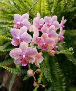 Botanischer Garten P1000229