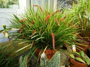 Botanischer Garten P1000243