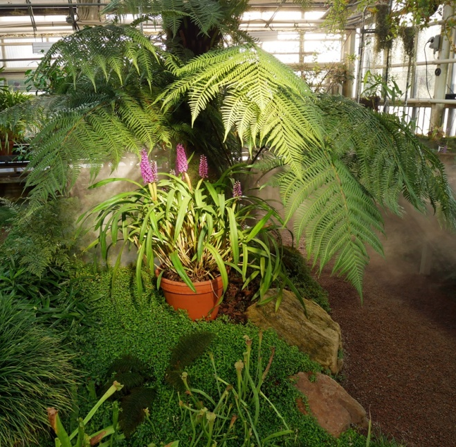 Botanischer Garten P1000251