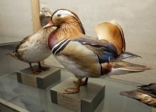 Naturhistorisches Museum Göteborg, Schweden