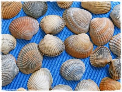 Muscheln, gesammelt in Skummlövsstrand