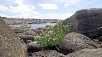 Biskopshagens Naturreservat Väröbacka 06