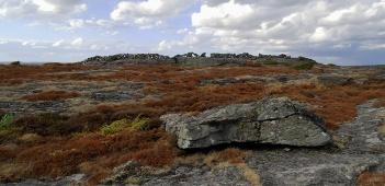 Biskopshagens naturreservat 04