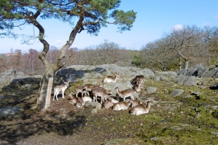 Slottskogen 06