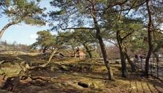 Slottskogen 10