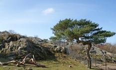 Slottskogen 13