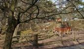 Slottskogen 14
